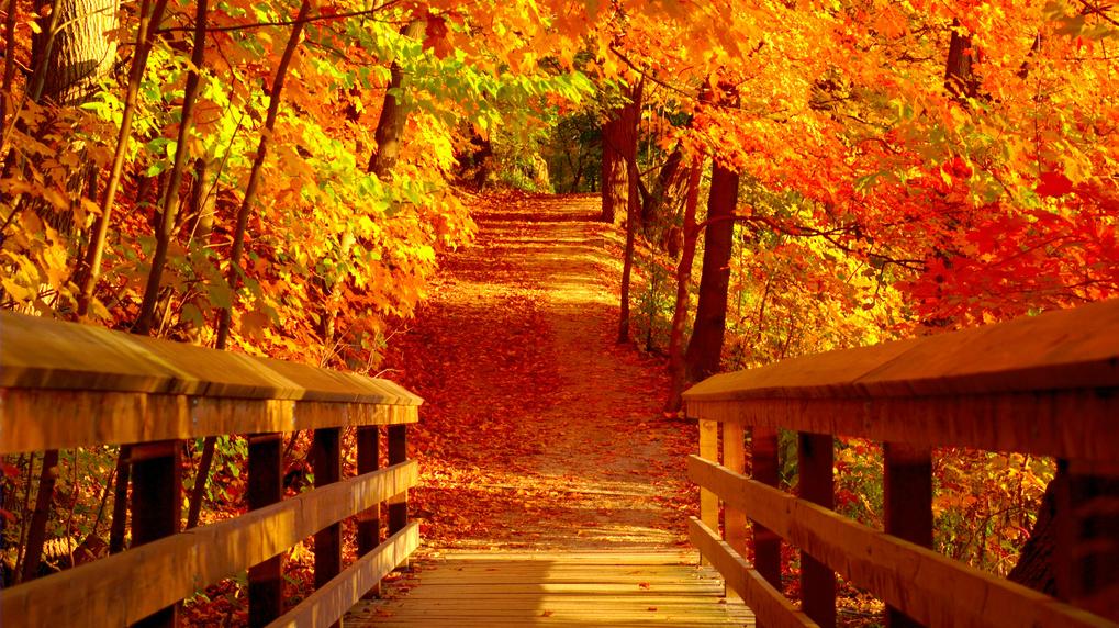 Znalezione obrazy dla zapytania jesień